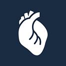 Heart muscle